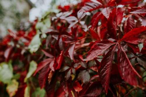 Close-ups of leaves on trees
