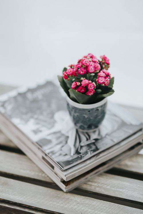 Little pink flowers in a pot with various items