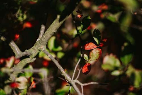 Close-ups of leaves, flowers and fruit on trees, part 2