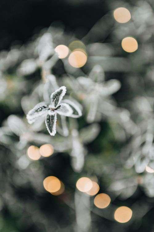 Frozen leaves & twigs