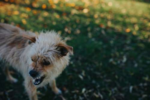 Dog in an autumn garden