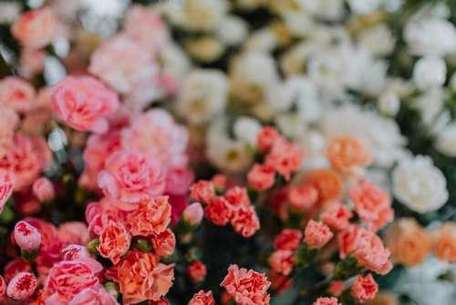 Various multicolored fresh flowers