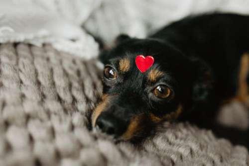 A dog with heart on head
