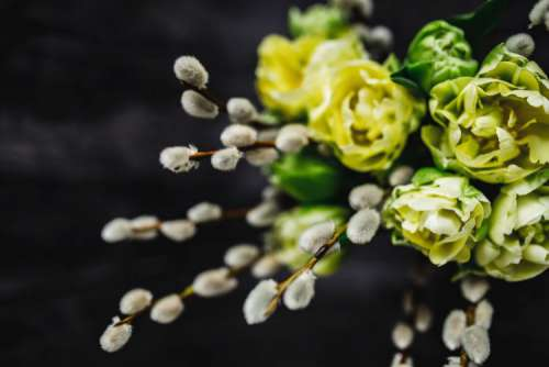 Close-ups of little yellow flowers and catkins in a glass jar