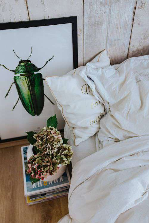 White bed sheets with a picture of a green beetle and a pot plant on a stack of magazines