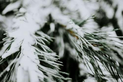 Close-ups of snowy trees