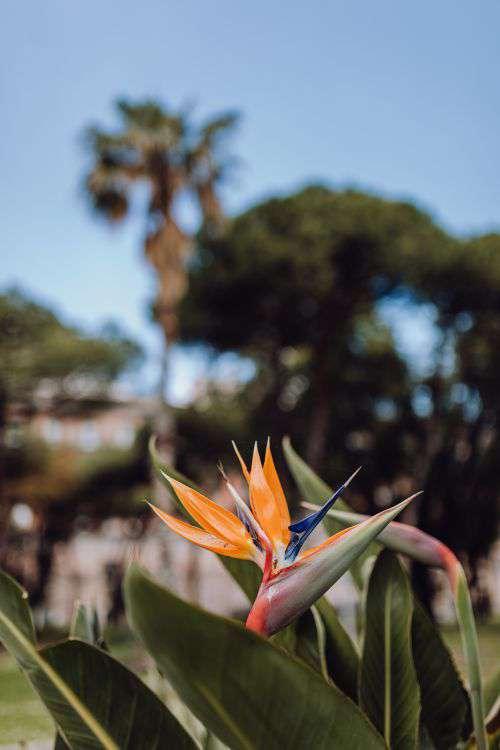 Plants of Naples