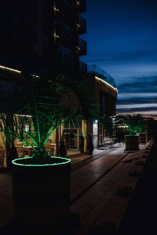 Illuminated palm trees