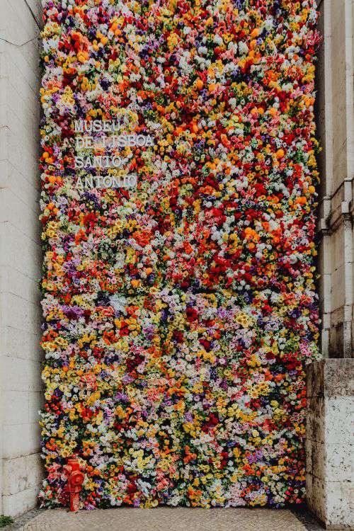 Fest Santo Antonio - Various color flower background wall - Museu de Lisboa, Lisbon, Portugal