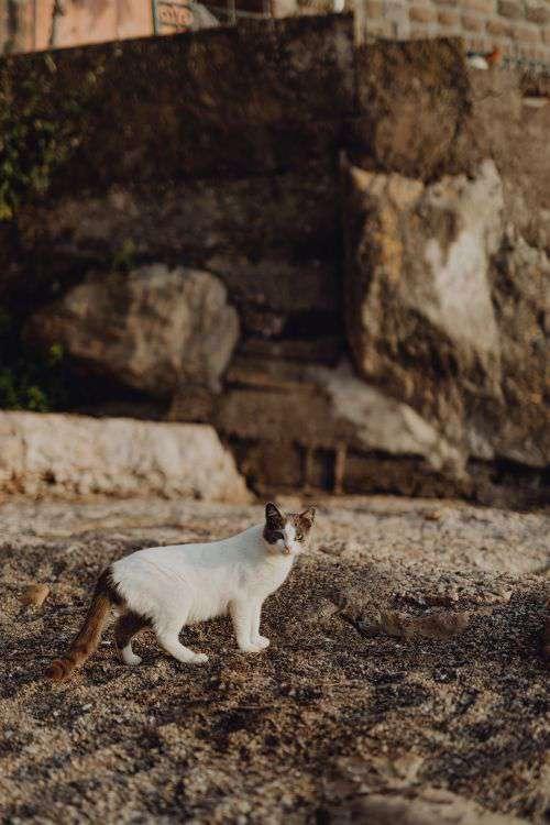Cats from Sorrento, Italy