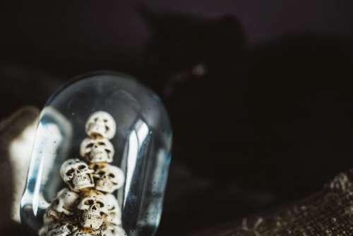 Water Globe with Skulls
