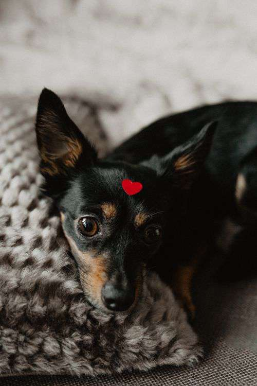 A dog with heart on head