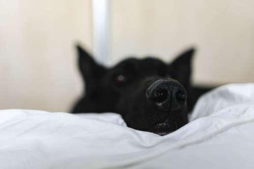 Adorable black dog