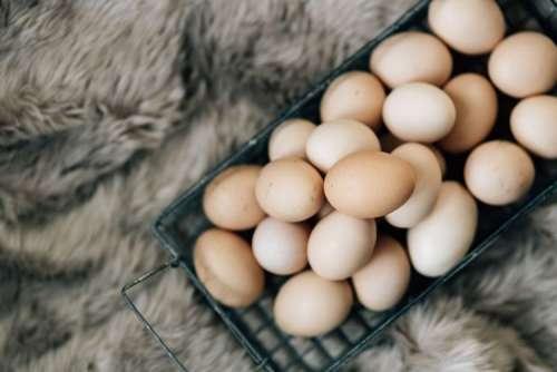 Wire mesh basket with fresh farm eggs