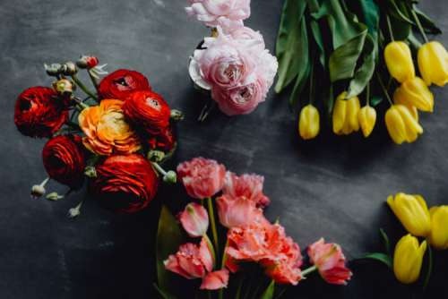 Colorful flowers on grey background with copy space