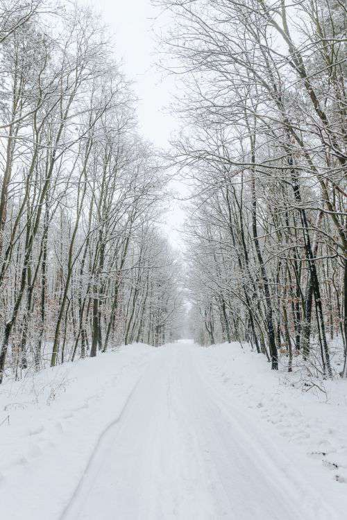 A snowy road in the forest