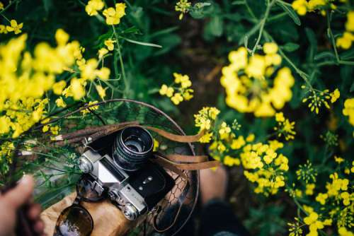 Woman with vintage camera in the field of blooming rapes