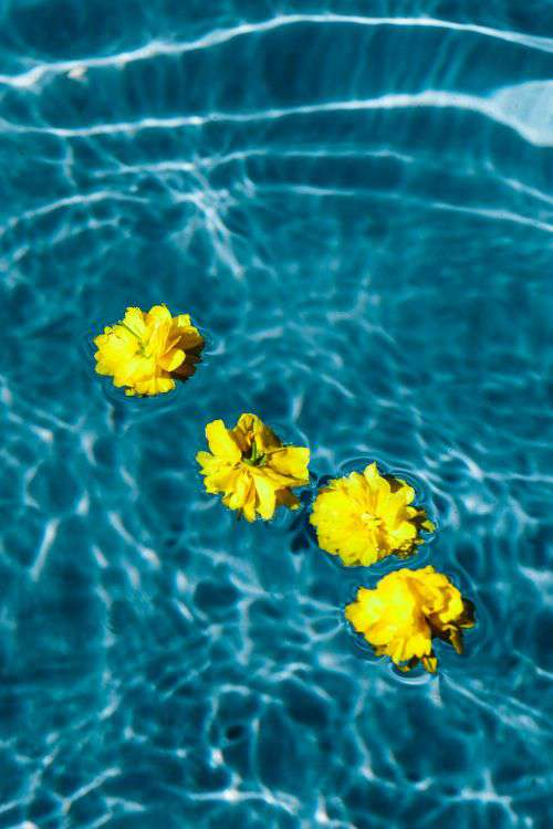 Small yellow flowers floating in the pool