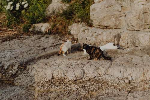Cats from Sorrento, Italy