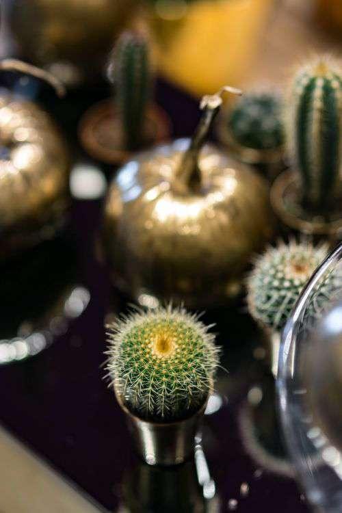 Golden ornamental pumpkins with cactuses