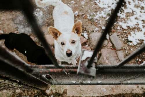 Dogs behind metal bars