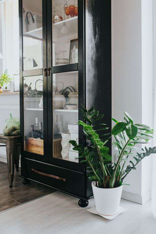 Home decor with green plants