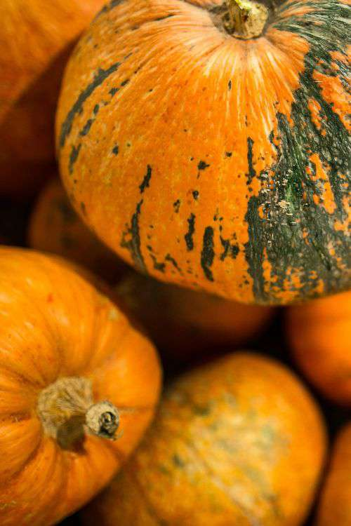 Close-ups of pumpkins in a wooden box