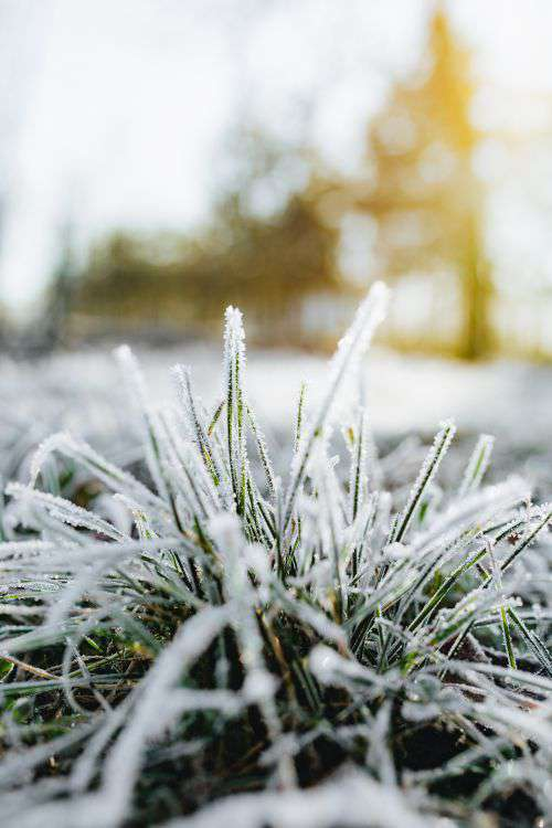 Frost covered grass in the morning