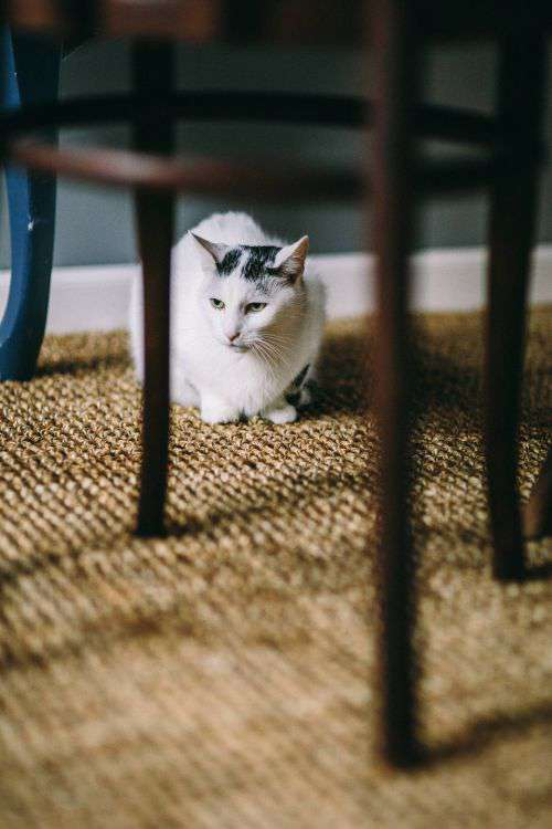 Black and white cat on a floor under a table