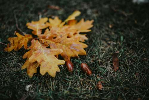 Autumn leaves on the ground