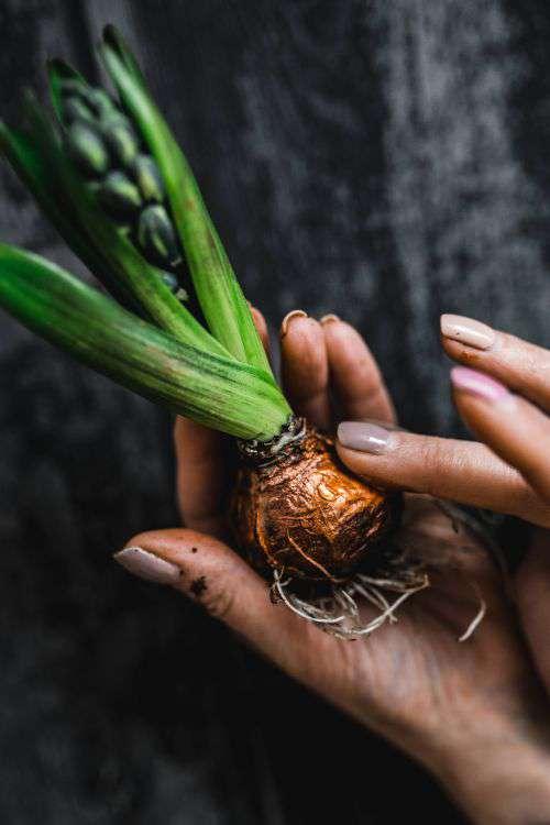 Woman making a little ornamental seedling in a small jar