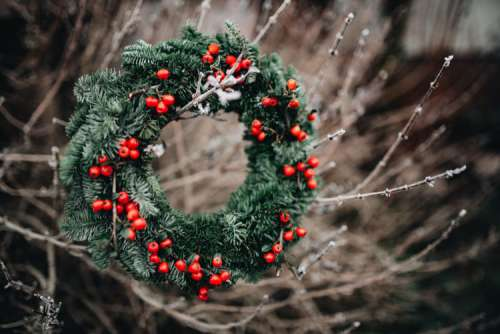 A Very Merry Fresh Holly Wreath for Christmas