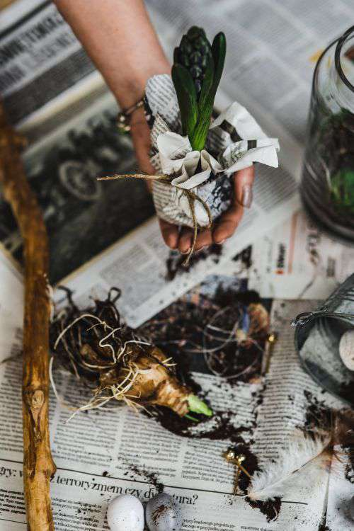 Woman planting seedlings on a newspaper covered table with quail eggs