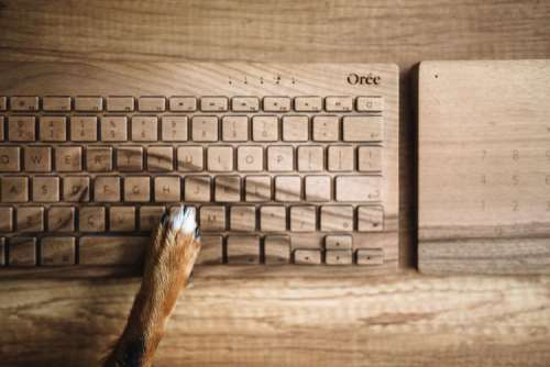 Dogs paw on the wooden keyboard