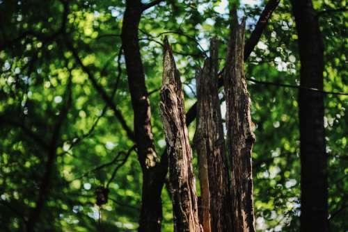 A walk through the forest moze