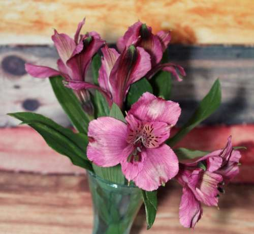 nosegay bouquet flower flowers pink