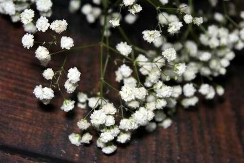 flower flowers Gypsophila Gypsophila paniculata wooden
