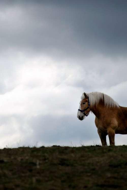 Horse on Pasture Free Photo