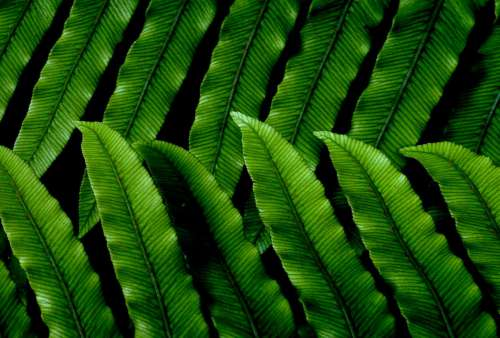 Green Leaves Pattern Free Photo