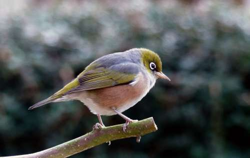 Bird Perched on Tree Free Photo