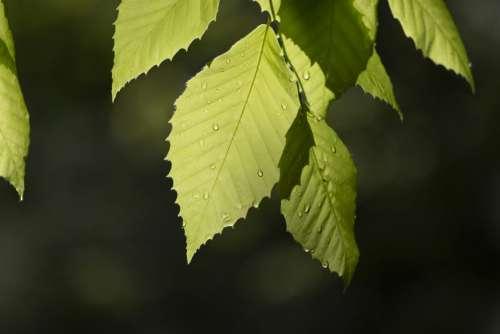 Tree Leaves Close Up Free Photo