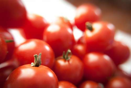 Fresh Tomatoes Free Photo