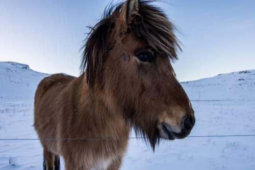 Winter Wild Horse Free Photo