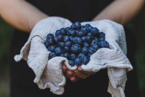 Hands Holding Blueberries Free Photo