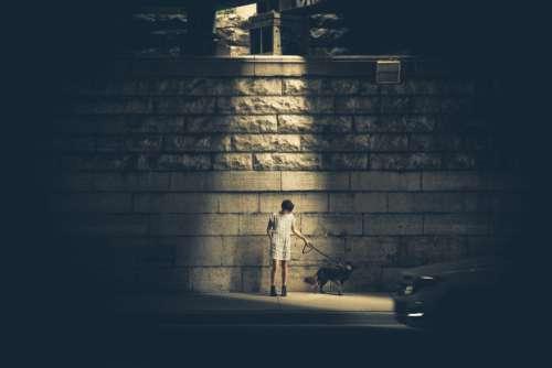 Walking Dog Street Free Photo
