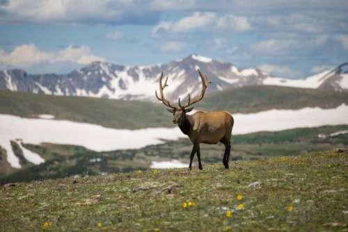 Reindeer Mountain Snow Free Photo