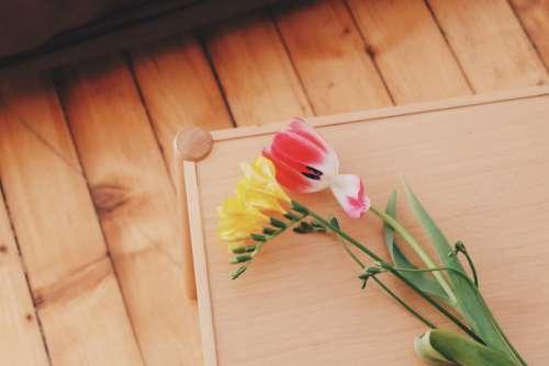 Tulip Yellow Red Free Photo