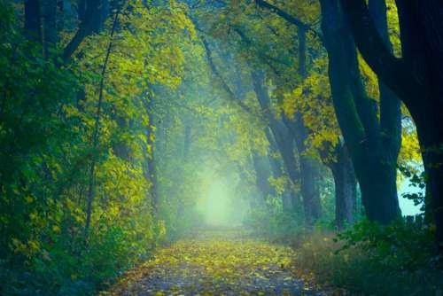 Enchanting Forest Walk Free Photo