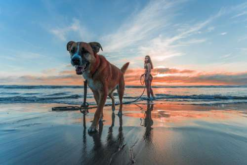 Woman Walking Dog Beach Sunrise Free Photo
