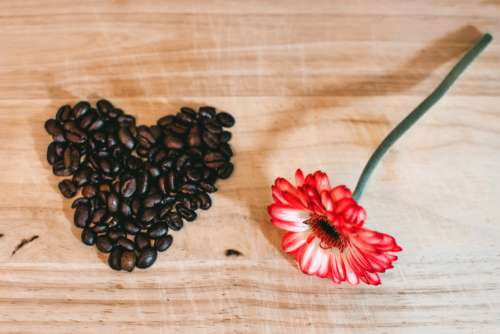 Coffee Loveheart Red Flower Free Photo